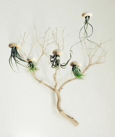 Air Jellyfish Plants – Fubiz™