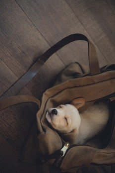 puppy in a bag on Inspirationde