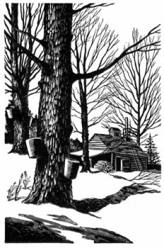 Paul Landacre, Sugar Maple | A1-Printmaking | Pinterest