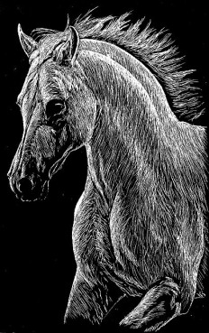 Pin by Pamela Joyce Hidden on Scratchboard | Pinterest