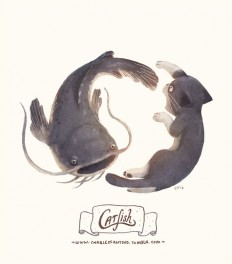 Illustration / Catfish
