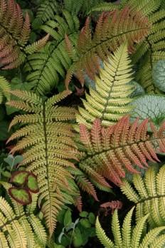 HeraldNet.com - Plants that thrive in shady Northwest gardens