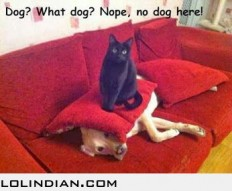 No, i havent seen any dog here - LOL Indian - Funny Indian Pics and images
