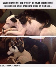 Cute dog friendship - LOL Indian - Funny Indian Pics and images