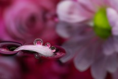 Macro Photography by Miki Asai