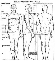 estrutura corpo humano desenho - Pesquisa do Google