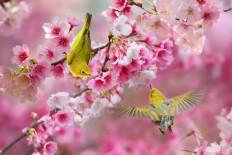 Birds Photography by Sue Hsu