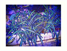 """spider plant"" Art Prints by jasonlee3071 
