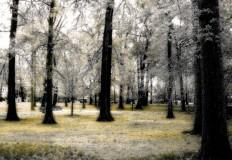 Bowne park by Howard Lee