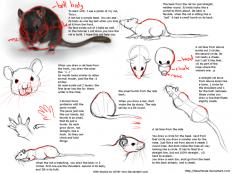 rat_tutorial_by_nezupanda-d4t6zx8.png (900×675)