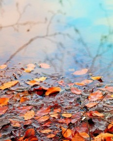 Autumn, Nature photography, fall, wall decor, leaves, wall art, reflection, Orange, rustic, gift ideas, home decor, Prints & Posters, 8x10