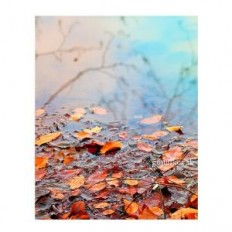 Autumn, Nature photography, fall, wall decor, leaves, wall art, reflection, Orange, rustic, gift ideas, home decor, Prints