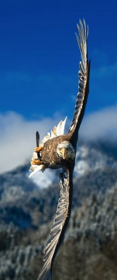 ??? ?? ???????????? Runette ?? ????? Eagles | Pinterest