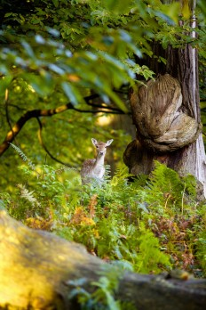 "500px / Photo ""somewhere deep in the forest..."" by Mark Bridger 