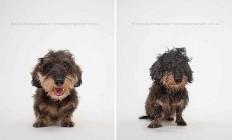 Dry Dog Wet Dog by Serenah Hodson