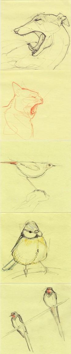 Pin de kris strohschein em Pen and Ink Drawings | Pinterest