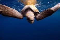Brillian Underwater Photography by Jorge Cervera Hauser