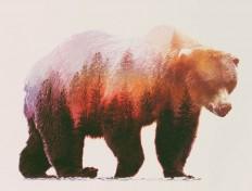 animal-kingdom-Andreas-Lie-2.jpg (Image JPEG, 760×576 pixels)