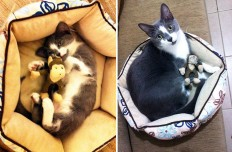 These 22 Before and After Pics Of Pets With Toys Are Everything That Adorableness Is - Dose - Your Daily Dose of Amazing