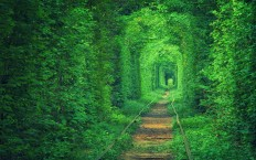 Lover's Tunnel in Ukraine - Photography Wallpapers