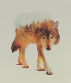 Double Exposure Animal Portraits By Norwegian Photographer in Photography