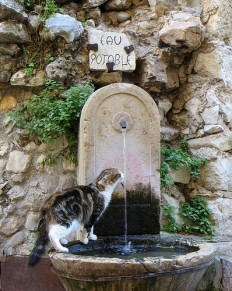 L'Assommoir - Streetcat.Saint Paul de Vence...