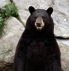 35+ Cool Pictures Of Bears