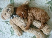Cute puppies caught in adorable sleeping positions | Metro.co.uk