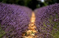 Fit For a Bear or a Hare / decorating with lavender flower - Google Images