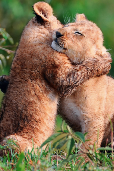 Danick's Blog - soulballer: Jungle Cat hug > Bear Hug