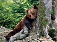 30+ Interesting Pictures Of Bears