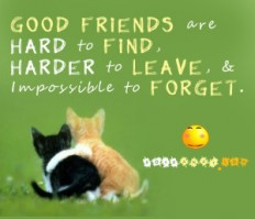 30 Remarkable Best Friend Quotes