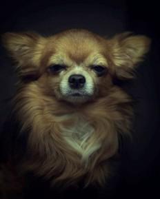 Emotional Portraits of Animals by Vincent Lagrange