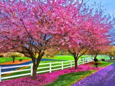 Spring day.. - Pixdaus
