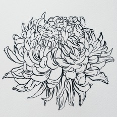 Cam Diamond — Quick speedball flower study