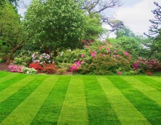 Interested In Acquiring Landscaping Services - Home Interiors And Exterior
