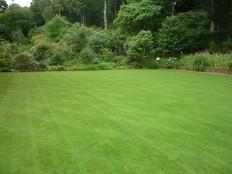 Jakie kosiarki do trawy: elektryczne czy spalinowe z nap?dem? Co kupi??