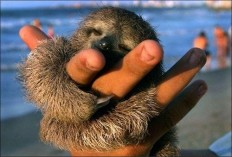 17 Astounding Facts About Sloths