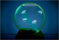 Desktop Jellyfish Tank » Design You Trust – Design and Beyond!