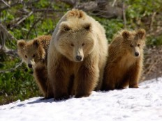 20+ Interesting Pictures Of Bears
