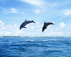 30+ Cool HD Pictures Of Dolphins