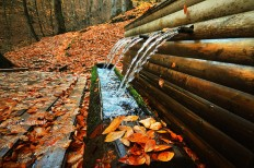 Autumn leaves fall fountain Nature photography Wall by gonulk
