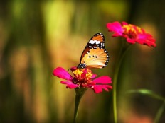 20+ Beautiful Pictures Of Butterflies | Picsoi