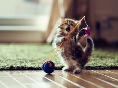 Beautiful And Cool Pictures Of Kittens