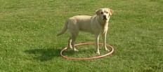 The Puppy Hula Hoop - Surprise Feed