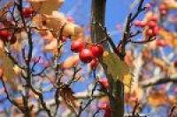 Berries by *CAStock