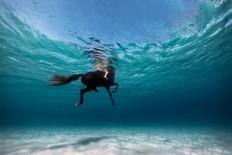Stunning Underwater Photography, Enric Adrian Gener