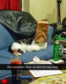 22 Times Cats Made No Sense
