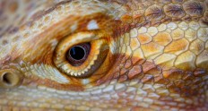 lizard eye macro | Flickr - Photo Sharing!