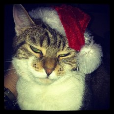 22 Cats Who Hate Christmas As Much As You Do